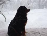 nevados