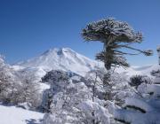 lonquimay-avalancha