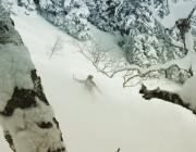 Thru the trees