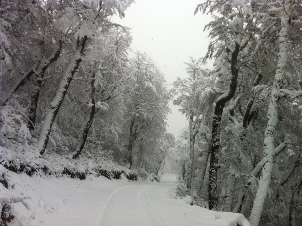 snow baguales