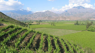 Chile's Vineyards
