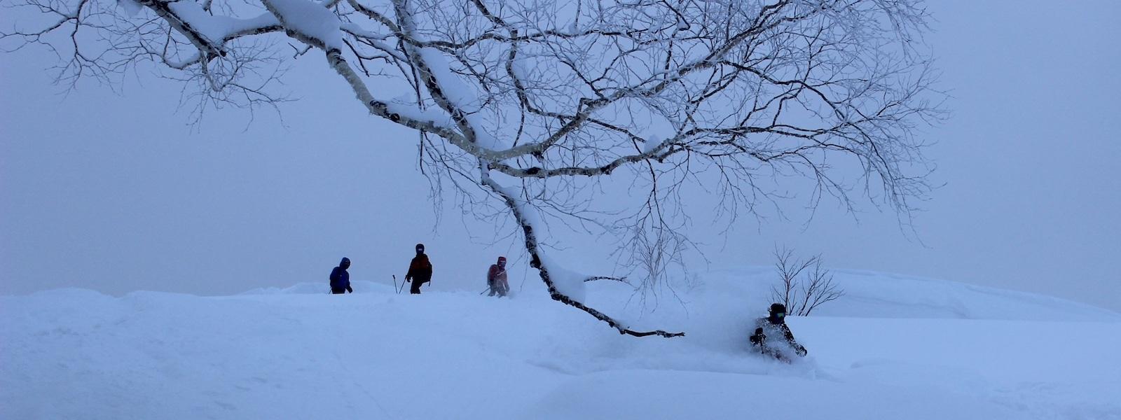 powder skiing in japan