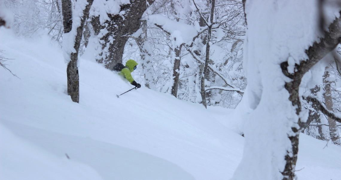 hokkaido tree skiing