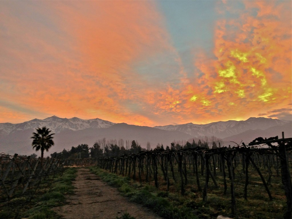 vineyard-southamerica-palm